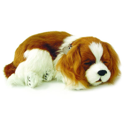 PERFECT PETZZZ CUCCIOLO DI CANE CAVALIER KING